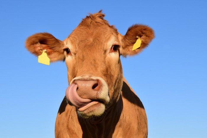 vache espagnole leche vocabulaire